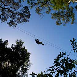 Zipline Tours in Tsitsikamma National Forest