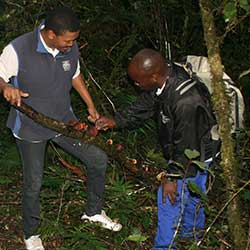 Outdoor Activities & Adventures, Tsitsikamma, Garden Route
